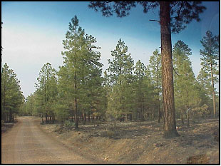 photograph, pictures of a road and burned area near the Rodeo-Chediski fire in Arizona