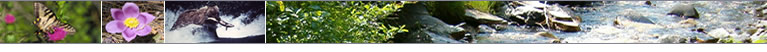 Image banner including pictures of wildlife, plants, and streams.