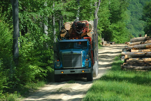 Loaded log truck on forest road, logs decked along the roadside.