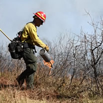 Prescribed fire on the White River National Forest.