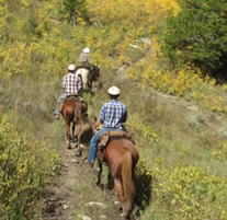 Guided trail ride on the White River National Forest.