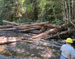Habitat improvement for salmon on the Tongass National Forest.