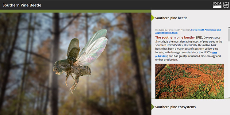 Forest Health Protection Southern Pine Beetle Story Map