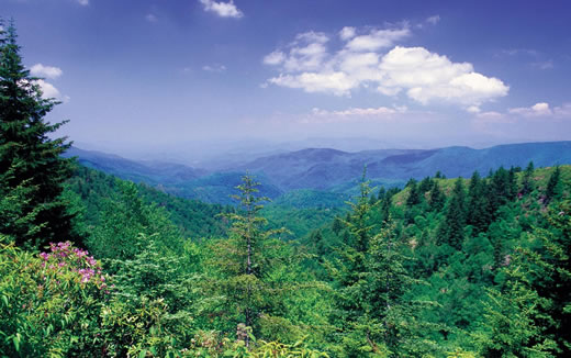 Mixed species Appalachian Mountains forest.