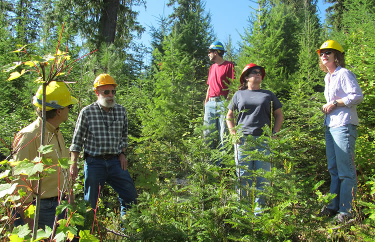 People in hard hats standing in a young stand of conifers.