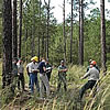 A group of resource officials and partners having a discussion in a pine forest.