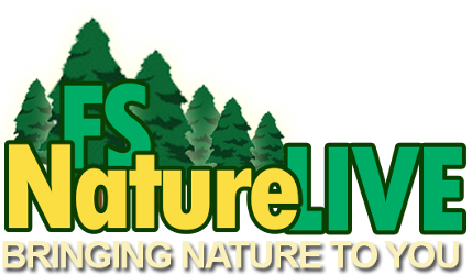 Forest Service NatureLive illustrated icon.