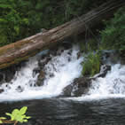 Photo ground water and waterfall. Courtesy of US Forest Service