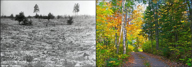 Chequamegon-Nicolet National Forest photos before and after landscape restoration.  The photo on the left features the Deerskin Area Plantation in 1937, which was established to curtain erosion and restores the land's productivity.  The photo on the right depicts a typical scene in the forest today.