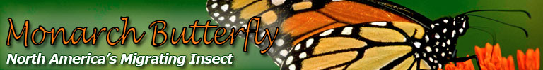Monarch Butterfly, North America's Migrating Insect