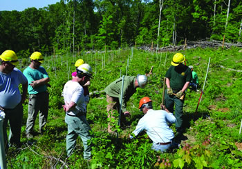 The Northern Research Station, the Hoosier National Forest, and the Indiana Chapter of The American Chestnut Foundation established a blight resistant American chestnut planting at Buck Creek on the Hoosier National Forest in spring, 2012.