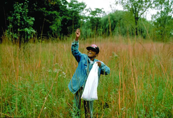 Gathering prairie seed is an easy, educational, and fun stewardship activity in the Chicago region. Stewards can be any age.