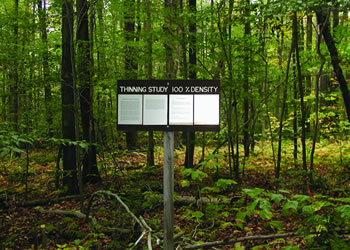 Unthinned Allegheny hardwood plots on the Kane Experimental Forest, Pennsylvania.