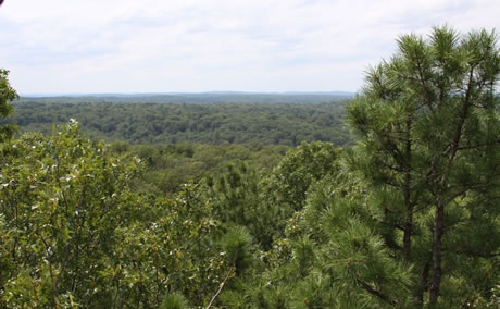 Missouri Ozark landscape.  Photo by Dan Dey, USDA Forest Service