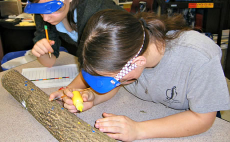 Dempsey Middle School science students paint and dissect ash logs to understand woodpecker feeding on emerald ash borer larvae. Photo by Joanne Rebbeck, USDA Forest Service
