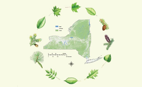 Map of forested land in New York, with leaves of common tree species .  Photo by USDA Forest Service