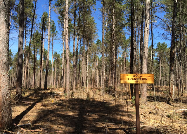 Silvicultural treatment soon after harvest in a red pine forest in Minnesota that is designed to transition this forest to future climate-adapted species.