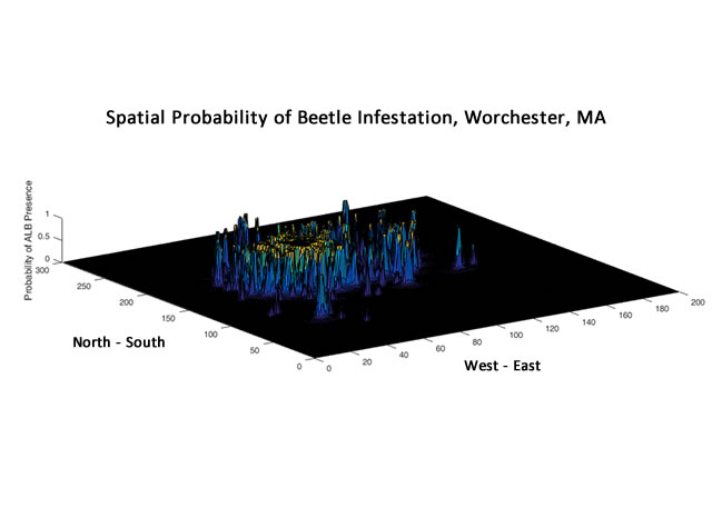the probability of finding the Asian longhorned beetle within the infested area around Worcester, MA