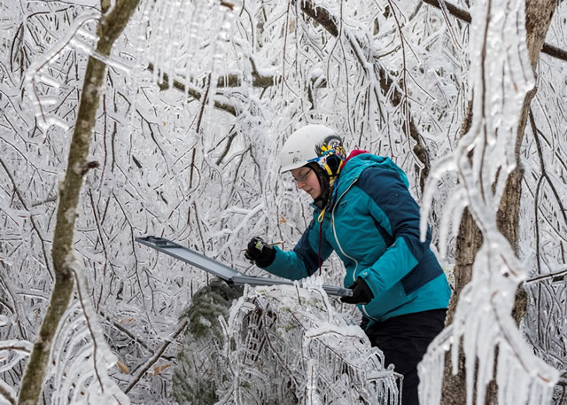 Masters student, Wendy Leunberger, takes measurements following a simulated ice storm experiment at the Hubbard Brook Experimental Forest.  Photo by Joe Klementovitch