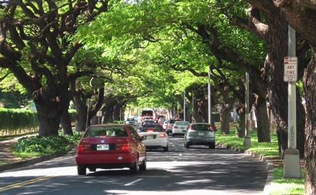 Forest Service scientists have shown that trees in cities remove tons of particulate matter annually, leading to lower particulate matter concentrations and consequently improved human health and reduced human mortality.