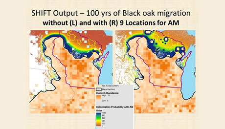 Potential colonization of new suitable habitat in northern Wisconsin (shown in the blue-to-yellow color band) for black oak over next 100 years without assisted migration (left), and with assisted migration (right).