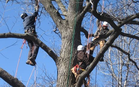 MillionTreesNYC training program participants practice tree climbing skills in Bronx Park, New York City. Photo by Andrew Newman Program Manager, MillionTreesNYC, used with permission