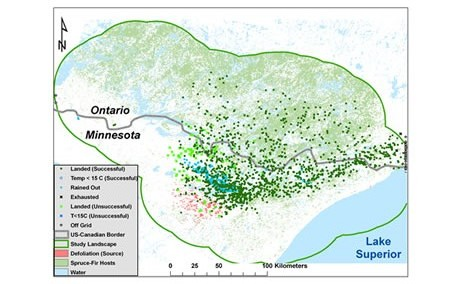 Simulated spruce budworm moth dispersal via wind currents from a localized outbreak in Minnesota in June 2007. Forest Service scientists and partners are developing a new modeling approach that may be applied to a wide array of important forest and agricultural pest species.