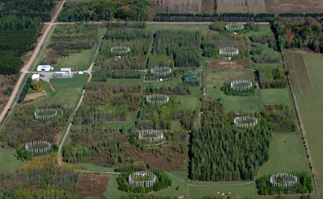 Aerial view of the Aspen-FACE experiment near Rhinelander, WI. Photo by Eric Gustafson, U.S. Forest Service.
