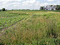 Prairie strips integrated into row crops in Iowa for protection of water quality and improving soil health, increases in plant and animal biodiversity, and enhancing populations of beneficial insects (US Fish and Wildlife Service Neal Smith National Wildlife Refuge, Prairie City, Iowa).