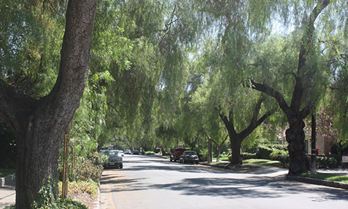 Large trees line a neighborhood street.