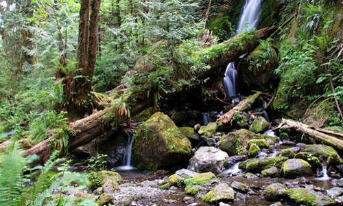 A temperate rain forest in Washington state.