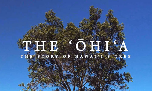 A screenshot of the title slide to the YouTube video, The Ohia: The Story of Hawaii's Tree.