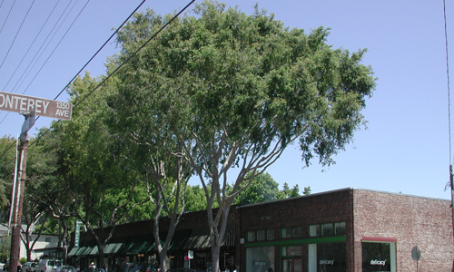 Street trees provide shade in front of businesses along the road.