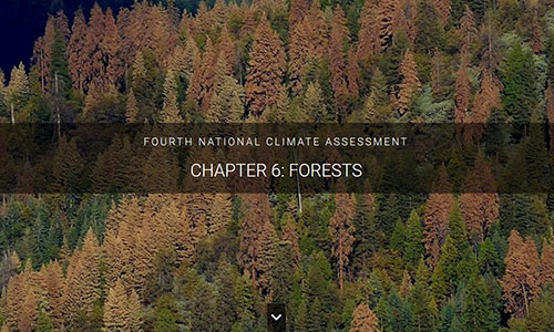 Prolonged droughts are expected to become more common as the climate continues to warm, increasing stress on lower-elevation tree species.