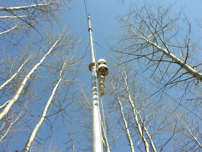 Looking upward into the trees. In the center is a pole with an assembly of passive samplers used for monitoring air quality.