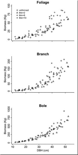Three graphs: foliage [X-DBH(cm)10 to 60, Y-Biomass(Kg) 0 to 100], branch [X-DBH(cm)10 to 60, Y-Biomass(Kg) 0 to 250], bole[X-DBH(cm)10 to 60, Y-Biomass(Kg) 0 to 1000].  for unthinned, thin+2, thin+8, thin+10