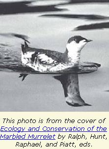 Photo of Marbled Murrelet