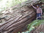 Picture of Monty with large Douglas Fir log in Jedediah Smith Redwoods State Park