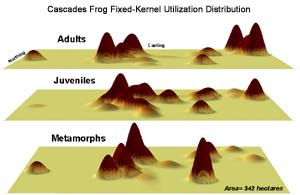 Fixed-kernel utilization distribution of Cascades Frog by age class