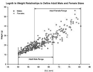Length to weight plot of adult male and female Cascades Frogs