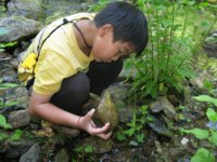 [Photograph]: Young boy looking under a rock in a stream.