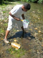 [Photograph]: Young using a net to catch aquatic insects.