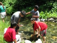 [Photograph]: Four students playing in a stream.