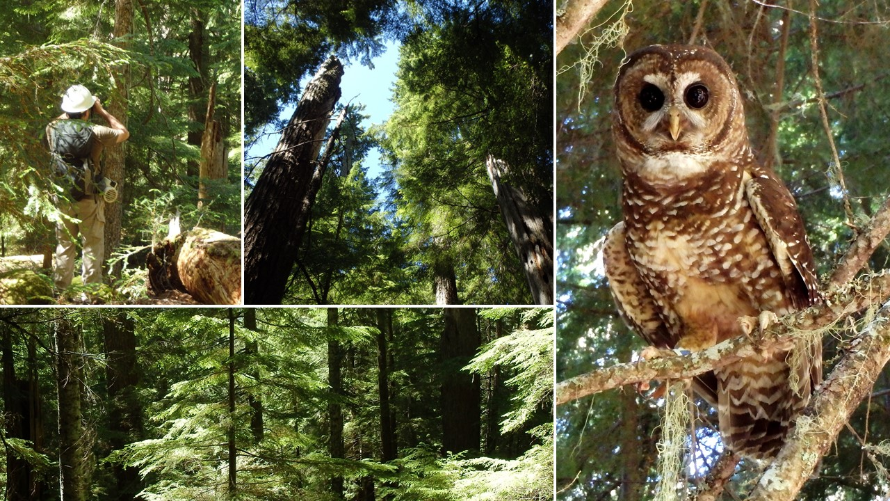 Owl monitoring Photo Collage