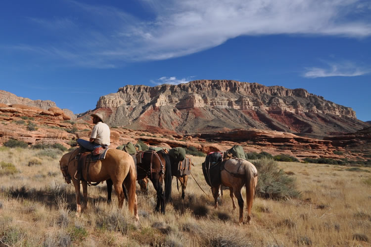 A rider on a horse and five other loaded pack horses on a grassland, a mesa in the background.
