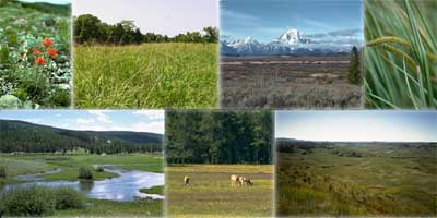 Pictures of a flower, prairie, mountains, grasses, stream, antelope, and valley.