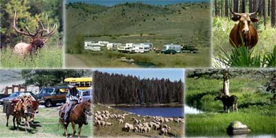 Pictures of an elk, sheep, campers, outfitter, cattle, and moose.