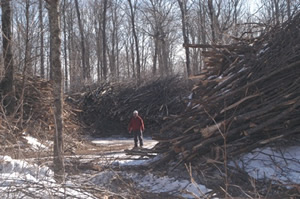 Hover to pause, click to view — Effects of Timber Harvesting and Biomass Removal on Forest Health Studied