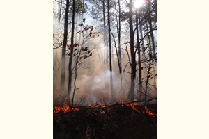 Hover to pause, click to view — Impact of Invasive Insects and Fire on Forest Water Resources