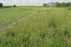 Hover to pause, click to view — Prairie Strips Lead to Better Environmental Health and Greater Socioeconomic Vitality